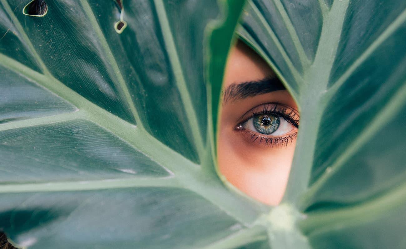 Eye in leaf