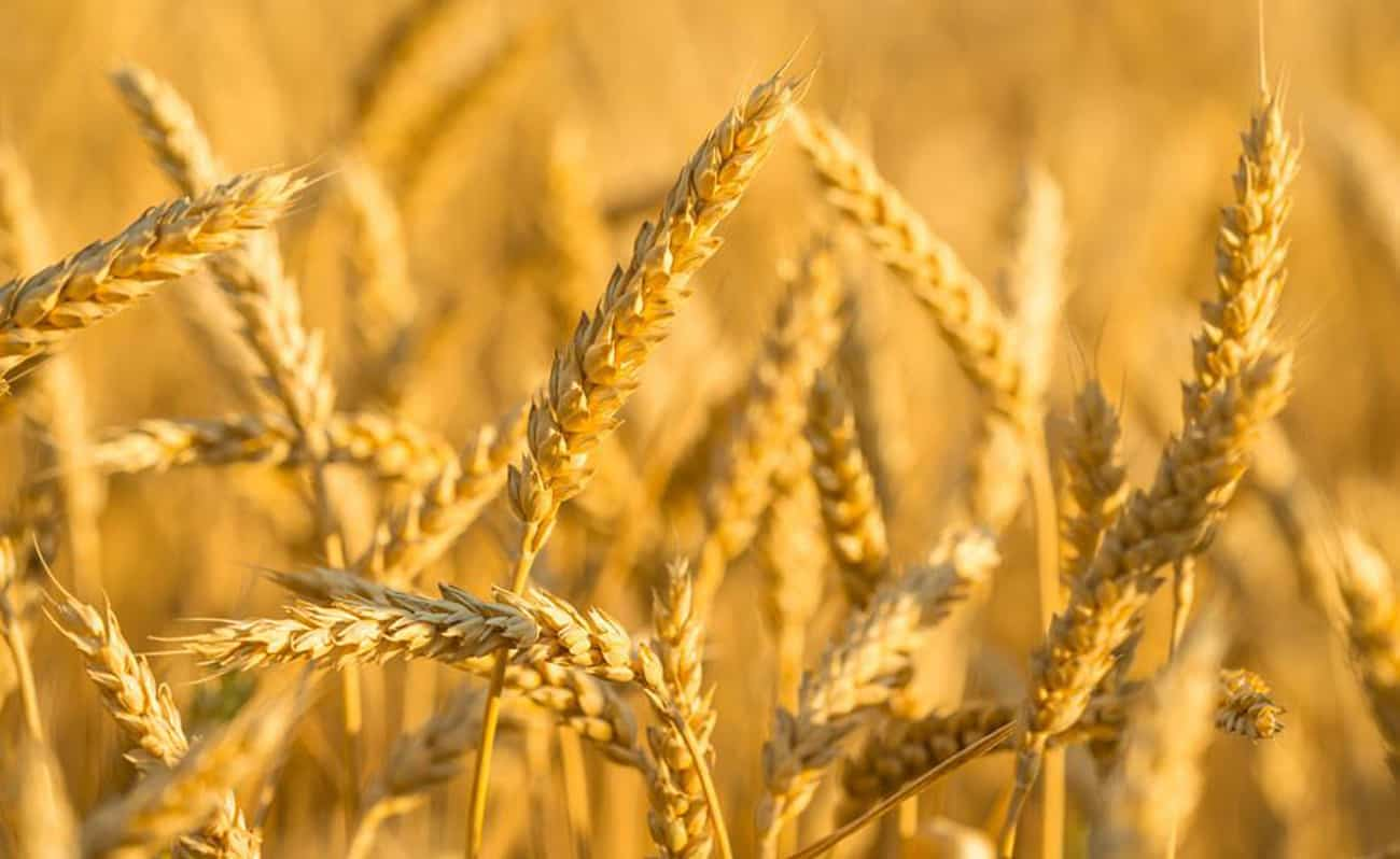 inspire-health-wheat